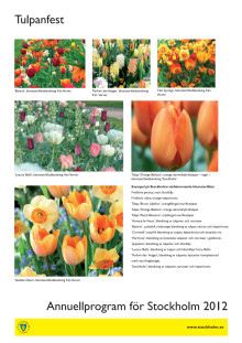 Tulpanfest - bilder och exempel på sorter