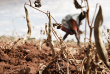 Folkekirkens Nødhjælp advarer: Katastrofen i Etiopien eskalerer