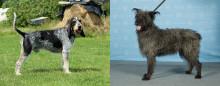 Två nya hundraser till Sverige
