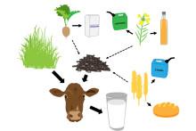 Biprodukter kan ersätta spannmål och soja i mjölkkornas kraftfoder
