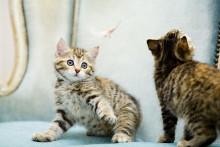 Pirkanmaalla tarvitaan uusia sijaiskoteja kodittomille eläimille