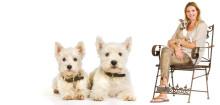 Hvilket hundetegn skal du vælge?