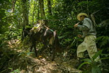 Køb tømmer fra små skovsamfund