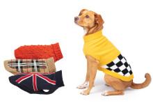 Gör din hund redo för hösten