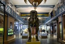 Elefanten i rummet eller varför åker MINE till Almedalen?