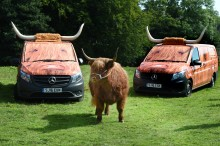 On the moo-ve in the Scottish Borders
