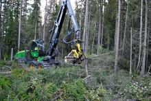 Flerträdshantering bra investering – även i slutavverkning
