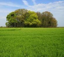 Små skogar viktigare än tidigare trott