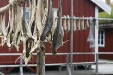 Premiere: Norwegischer Stockfisch erhält Eintrag in das EU-Qualitätsregister