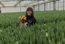 Nu blommar klimatneutrala svenska tulpaner