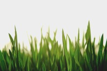 Panalpina aces on sustainability scores