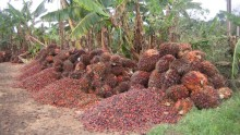 Cargill takes a stand and parts ways with unsustainable Palm Oil supplier.