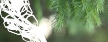 Kluster för bioindustri utvecklar framtidens förnybara skogsprodukter