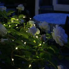 Lys upp med solcellsladdad ljusslinga
