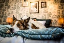 2 900 hundar vill bli modeller för Sveriges mest luxuösa hundrum