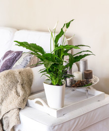 AquaForWeeks - håller växterna i perfekt skick!