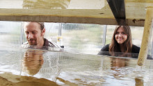 Swedish Algae Factory får 17 MSEK för att skala upp produktionen