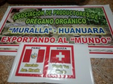 First shipment of organic oregano from Tacna Peru to the European market