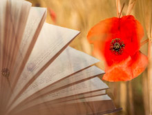 The Western Front, Remembered In Poetry