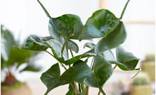 Spännande former trendigast bland inomhusväxterna