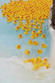 Center Parcs rubber ducks retire with over 1,500 miles under their wings for Great Ormond Street Hospital Children's Charity