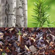 Njut av skogens alla fördelar!