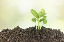 Få hjälp med klimatångest på miljöhumanistisk festival
