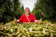 Carrefour innoveert met 1e residuvrije en duurzaam geteelde peer in de Belgische supermarkt