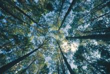 Svensk skog i fokus på Universeum