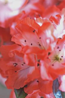 Blomsterfrämjandet trendtolkar med krukväxter i monter C04:02 på Elmia Garden den 23 - 24 september