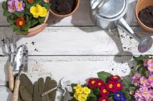 Vårdugnad i hagen