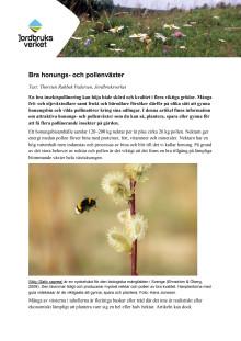 Växter som bina tycker om