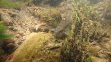 Naturvårdens dag 27 augusti  - bäcken i byn