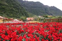 Luontoviikot Madeiralla Arno Kasvin seurassa