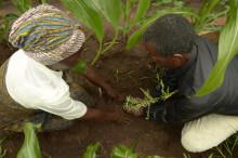 Sigtunas hotellnätverk besöker klimathjältar i Malawi