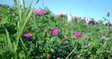 Friska grödor – bra för miljön, plånboken och matproduktionen