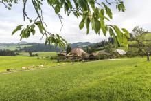 Süßes aus Bern für zu Hause