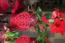 Månadens Blomma december - Röd Jul