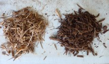 Neues Trocknungs-Verfahren macht Holz für die Industrie interessant