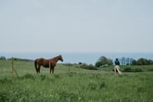 Nyt træningscenter for hest og rytter åbner i smukke omgivelser på Ærø