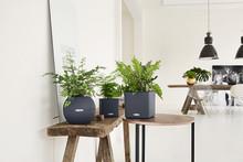 Ideen für ein grünes Zuhause