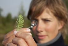 Yritysten luontopääomatarinoiden juttusarja käynnistyy tammikuussa