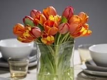 Tulpaner, tulpaner och ännu mer tulpaner