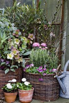 Recept på en lyckad plantering i mars