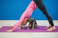 Online Yoga Studio Yoogaia.com unites animal lovers across the world on World Animal Day