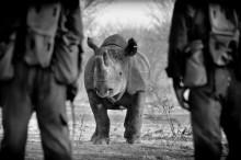 The Poaching Wars visas i Oslo