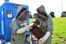 Flygplatsbin ger honungskörd på Landvetter