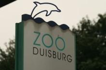 Steuerberater heizt dem Zoo Duisburg kräftig ein