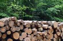 Kimberly-Clark: Why sustainability matters