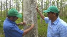 Zeugniszeit für Baumschüler